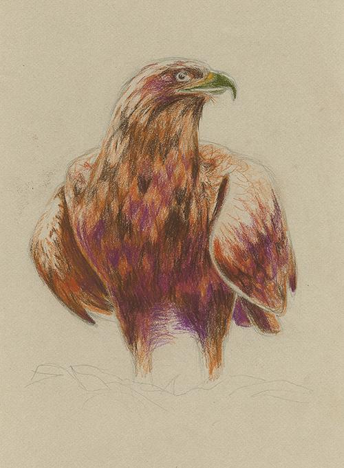 Eagle_sakitanaka.jpg