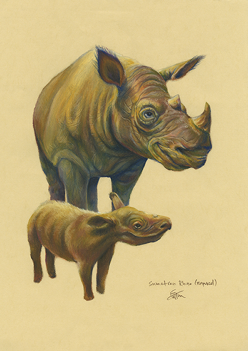 Rhino_sakitanaka.jpg