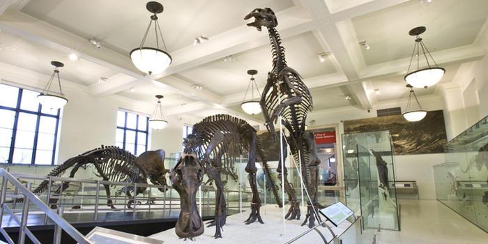 hall-of-ornithischian-dinosaurs_dynamic_lead_slide.jpg