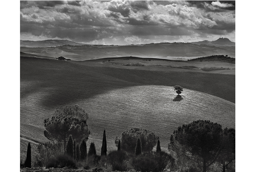 Tuscan Landscape 1 Tree in field Auction Copy