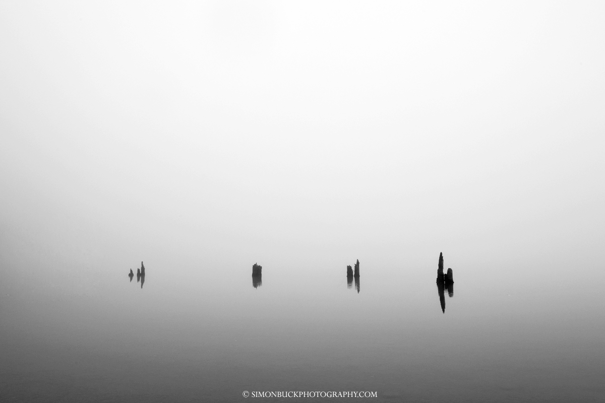 Lake Quinault, Olympic Park, Washington, USA, Landscape photograph., BW