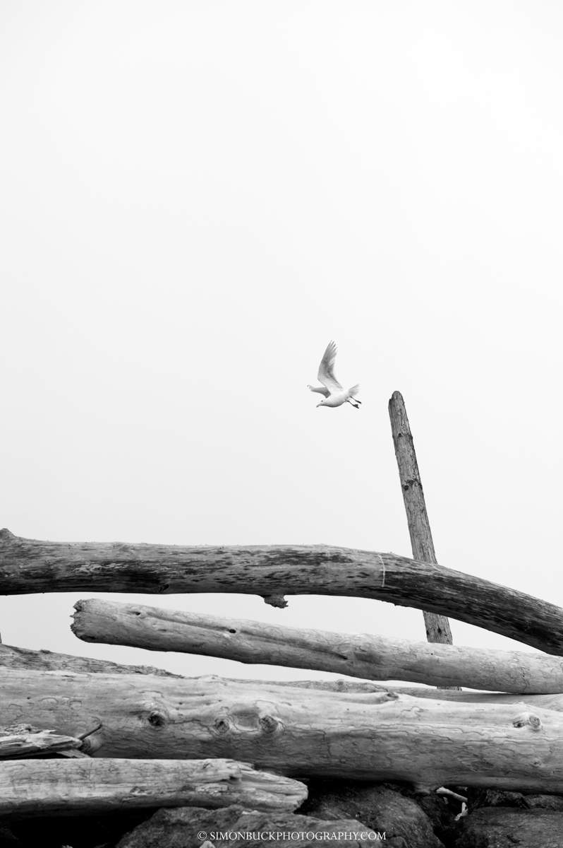 La Push, beach, gull, washington,