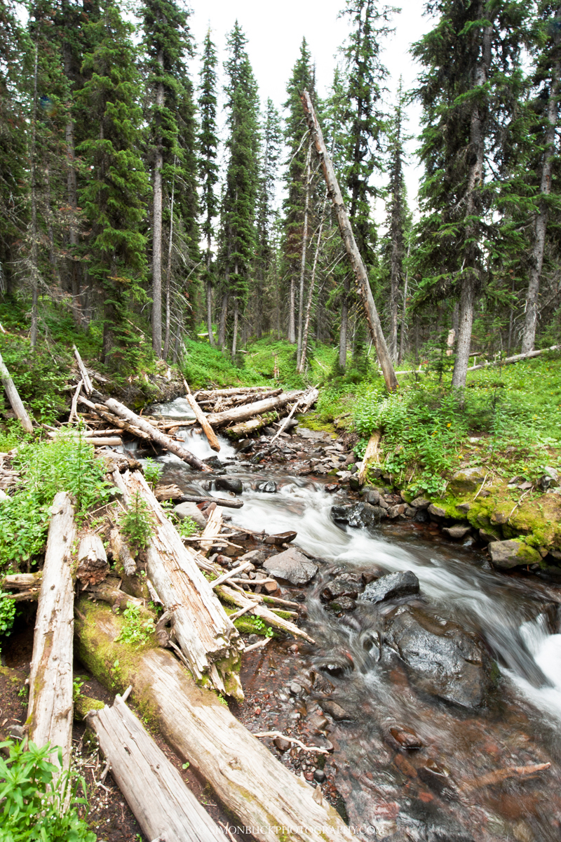 stream, hyalite, trail, lake, bozeman, montana, hiking, forest, landscape, photograph