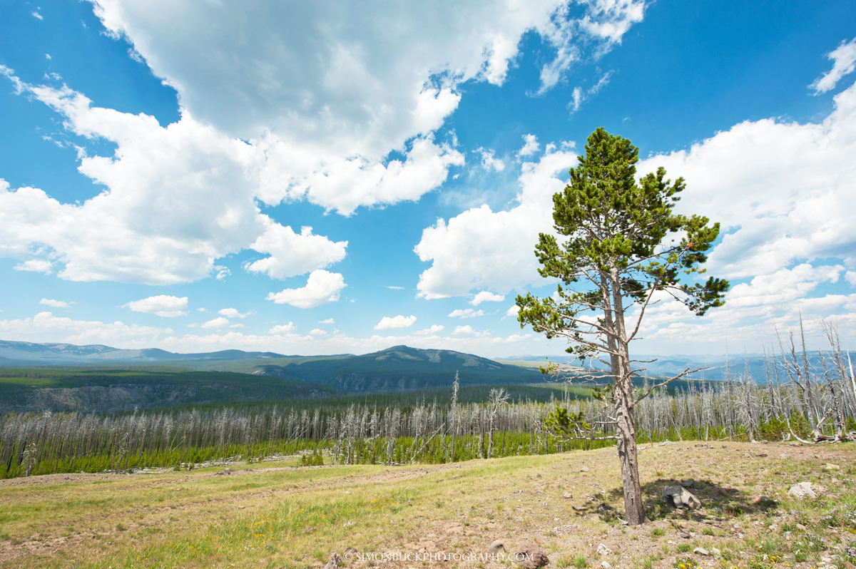 Yellowstone National Park, Landscape photograph, confer, pine, fire, clouds, blue sky