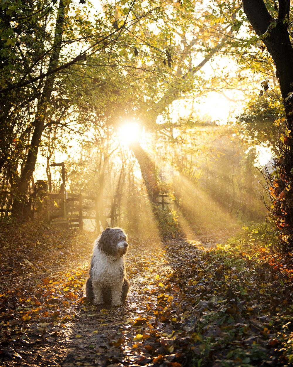 Dogs_Lifestyle0003.jpg