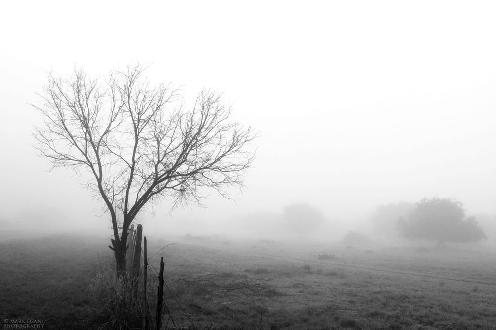 fogFLFW.jpg