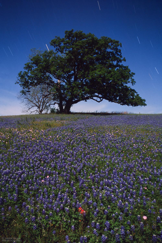 moonlitflowerstreecroppedFLFW.jpg