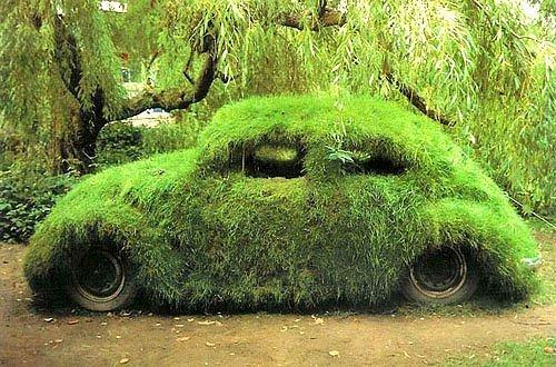 grassy bug