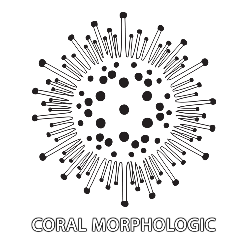 Coral-Morphologic-Logo-w-text.png