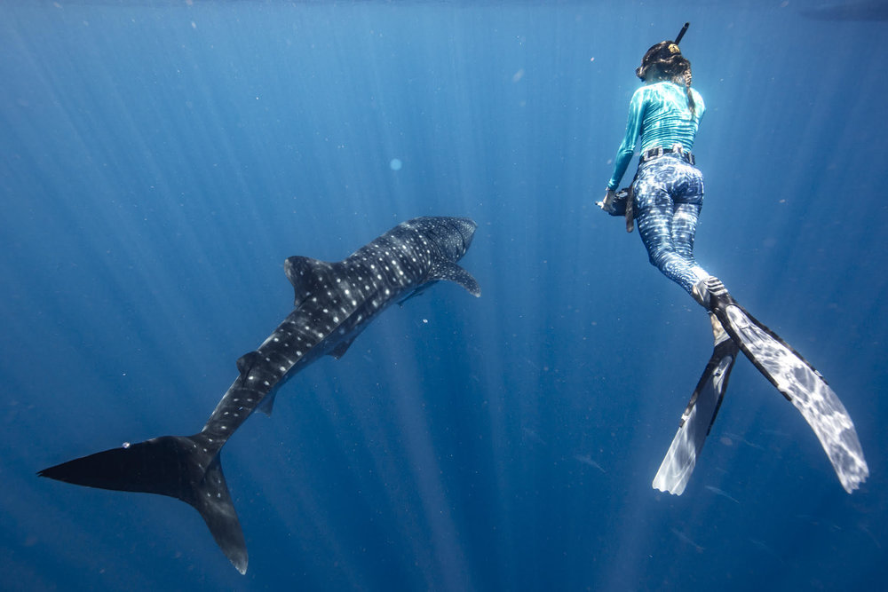 Photo: Madagascar Whale Shark Project