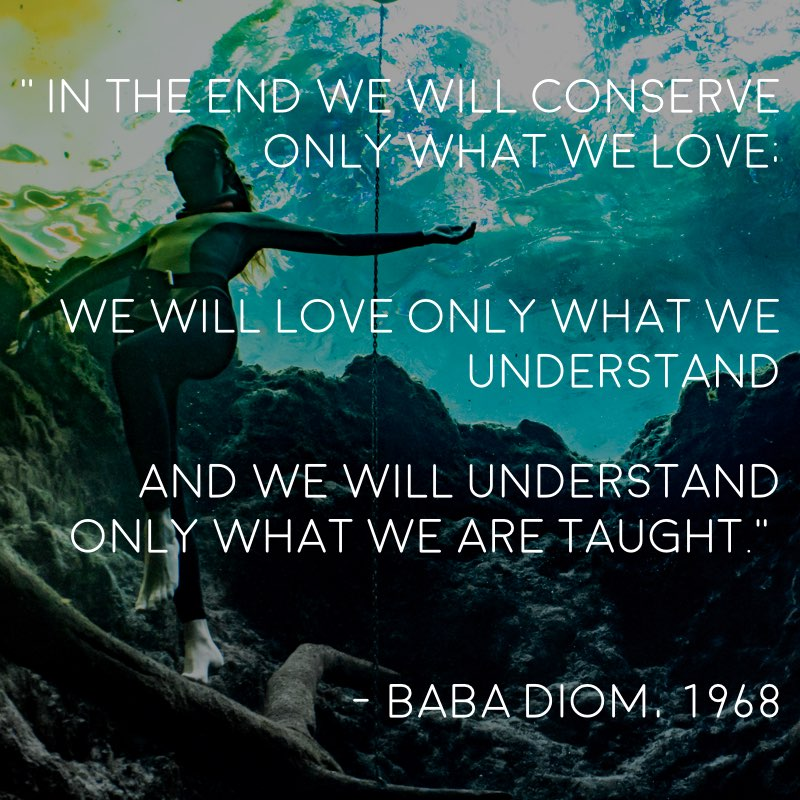 Baba diom protect what you love quote.001.jpeg