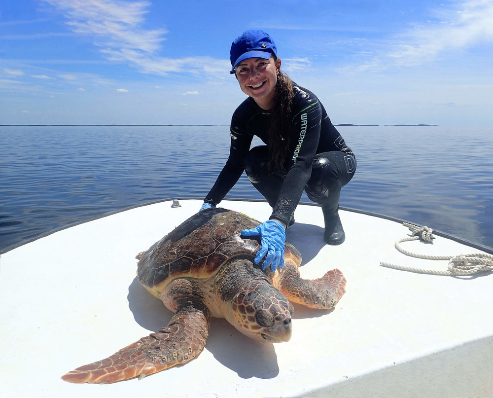 Dr. Fuentes with loggerhead turtle captured in Crystal River for population structure study. Photo by Matt Ware.