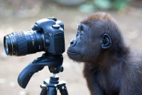 Any-Monkey-With-a-Camera-Thinks-He-is-a-Photographer.jpg