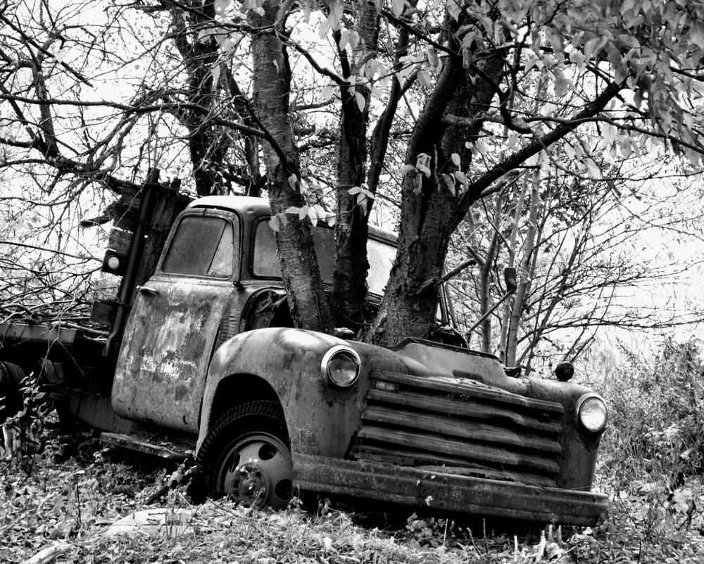 treetruck201310.jpg