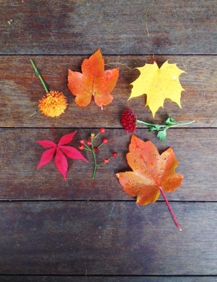 Fall Foliage | The Gallivant