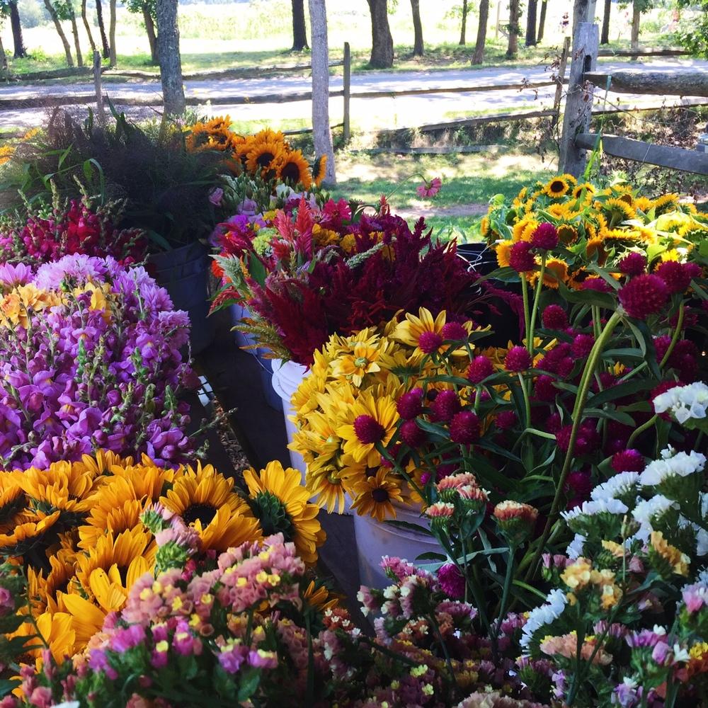 Morning Glory Farm | Martha's Vineyard | The Gallivant