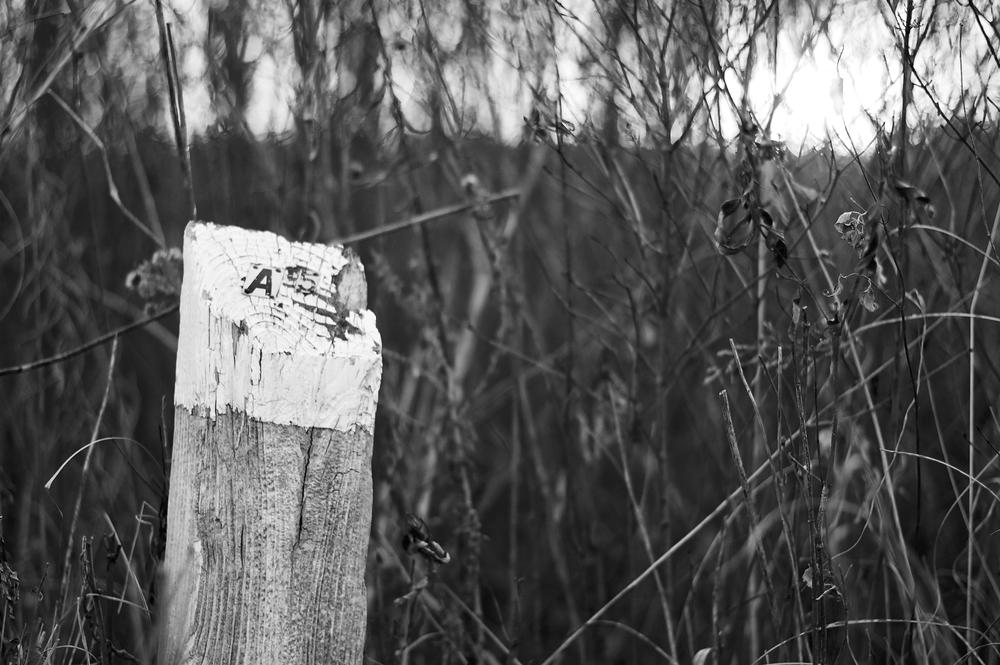 Post. University of Wisconsin Arboretum. Madison, Wisconsin. November 2011. © William D. Walker