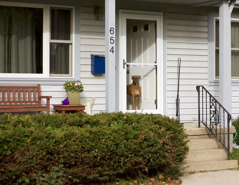 Watch Dog. Madison, Wisconsin. October 2014. © William D. Walker