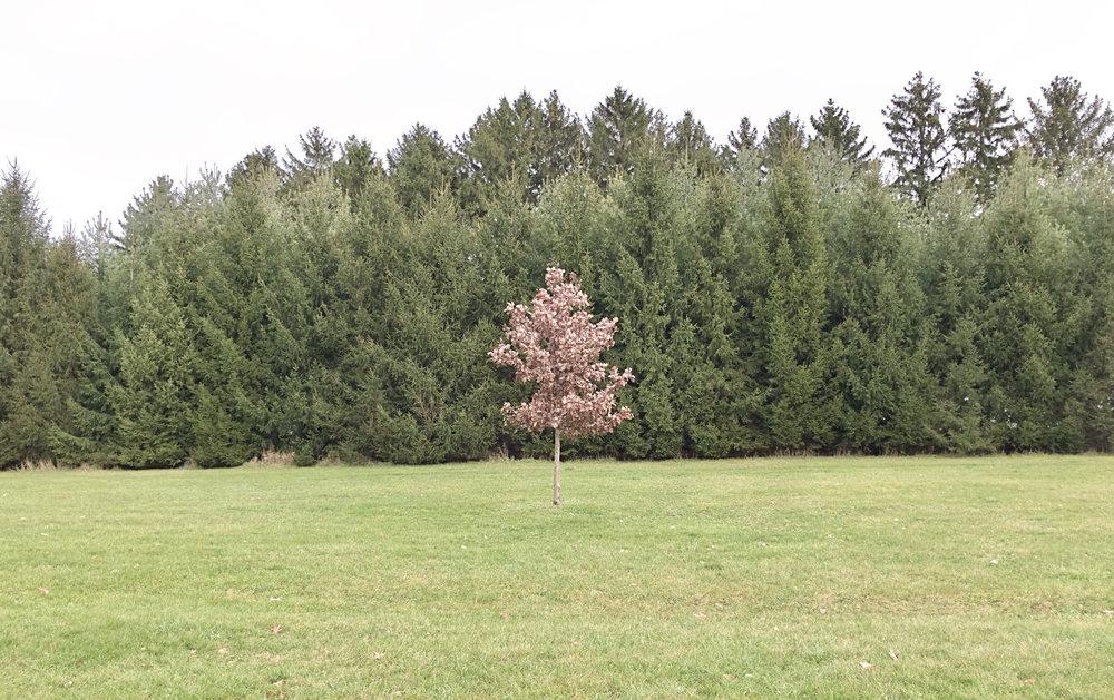 Tree. Lussier Center. Madison, Wisconsin. December 2016. © William D. Walker
