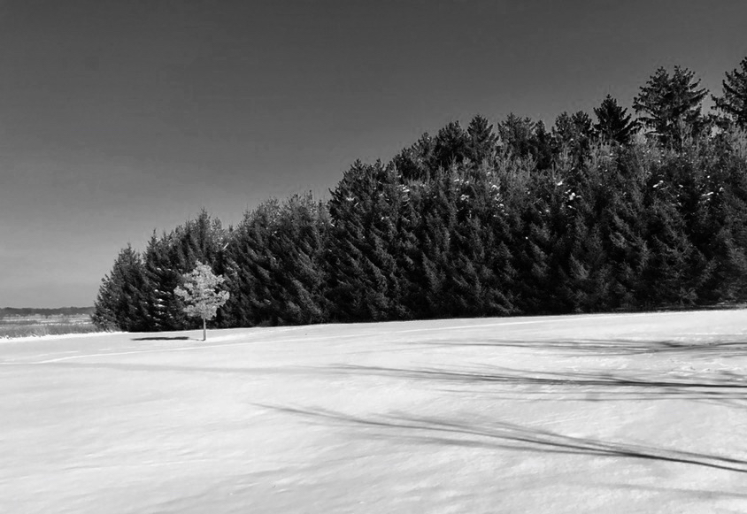 Tree Line. Lussier Center. Madison, Wisconsin. December 2016. © William D. Walker
