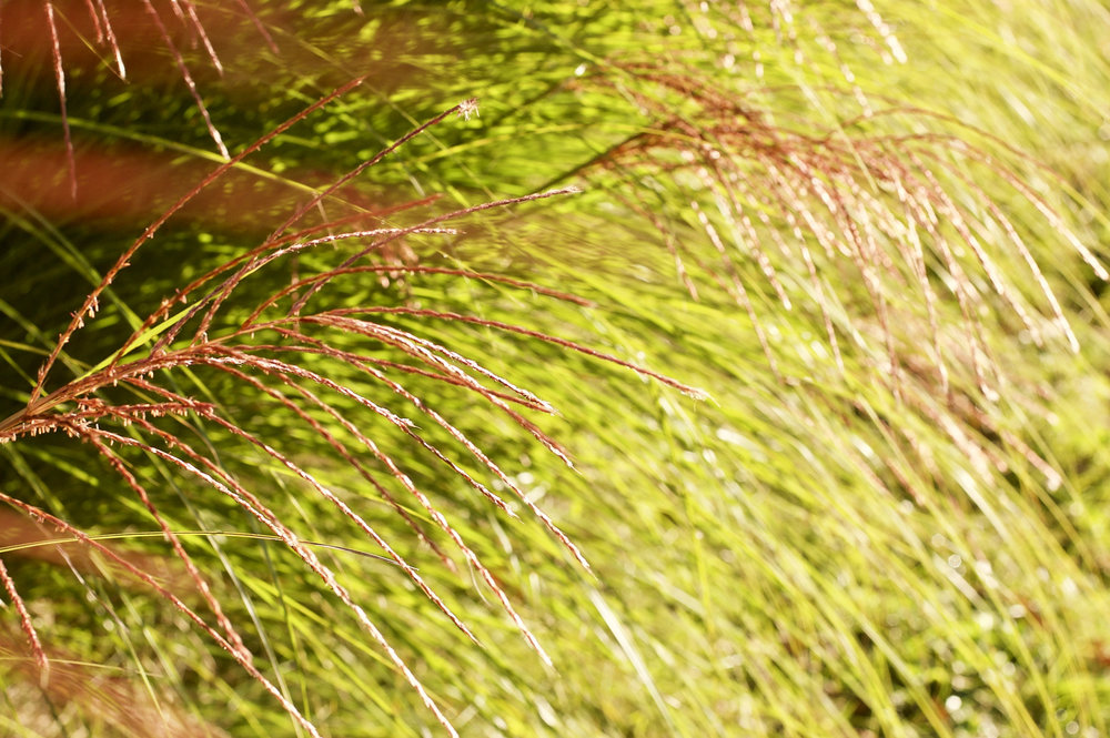 Grass. Madison, Wisconsin. October 2016. © William D. Walker