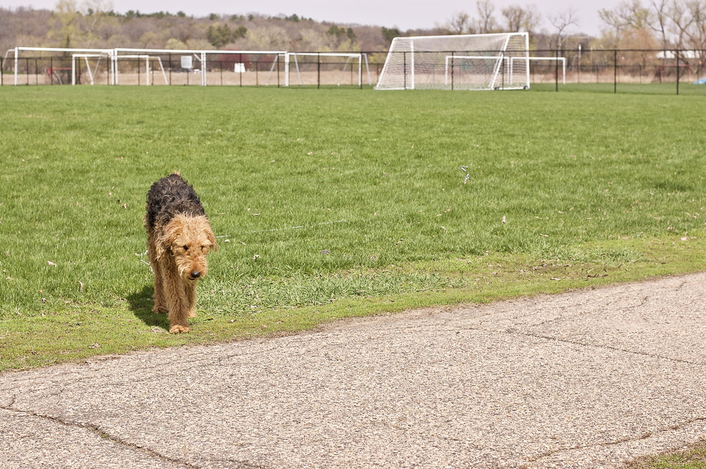 Leashed. University Bay Fields. Madison, Wisconsin. April 2015. © William D. Walker