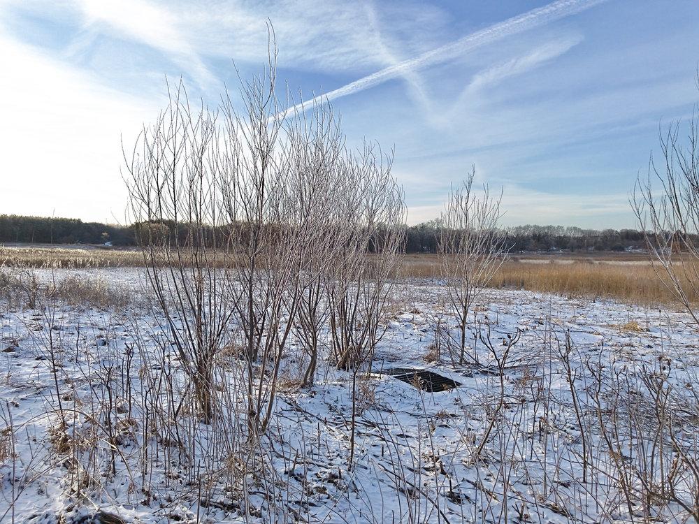 Field Drain. University of Wisconsin Arboretum. Madison, Wisconsin. February 2017. © William D. Walker