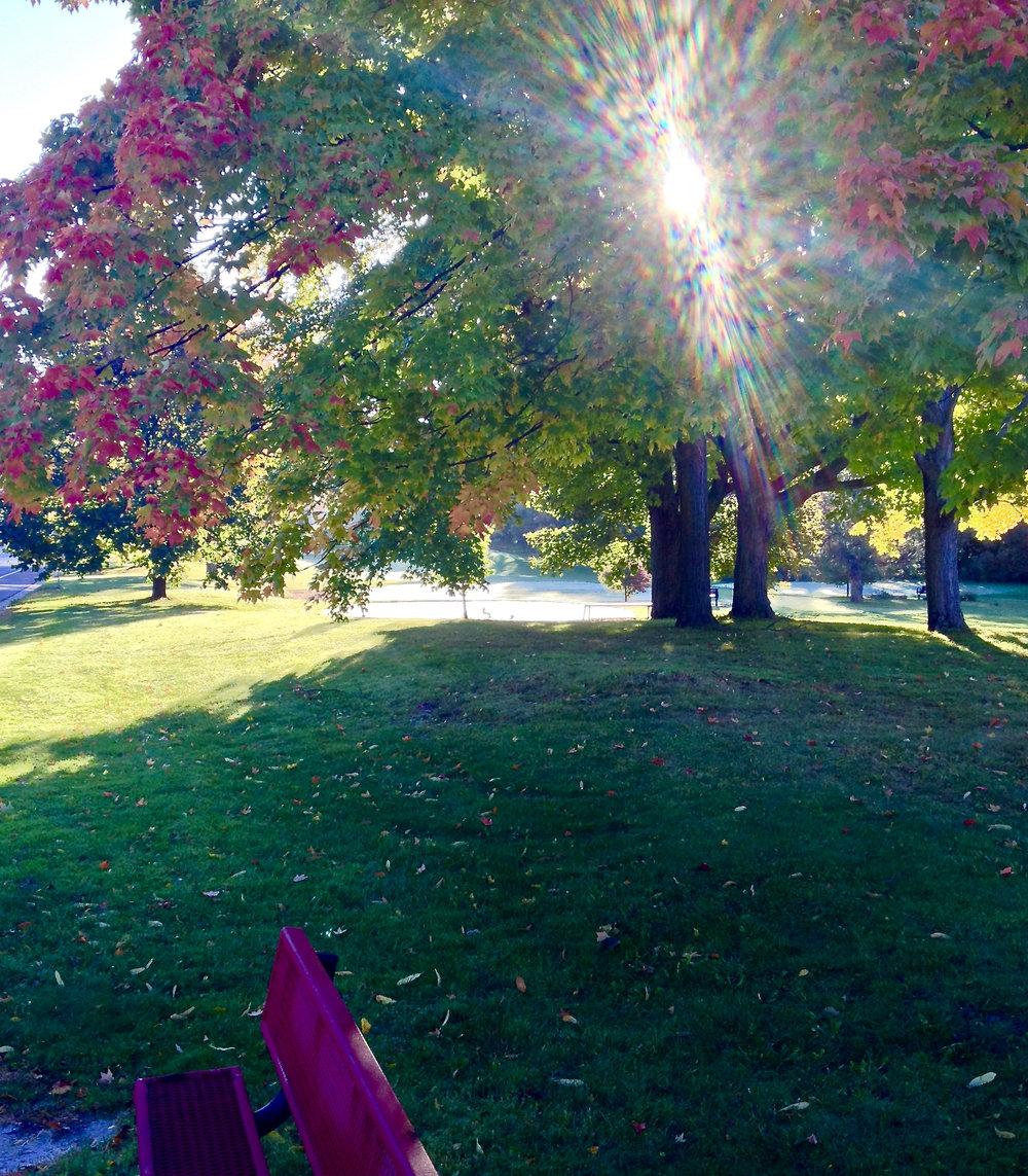 Fringe. Odana Hills Golf Course. Madison, Wisconsin. October 2015. © William D. Walker