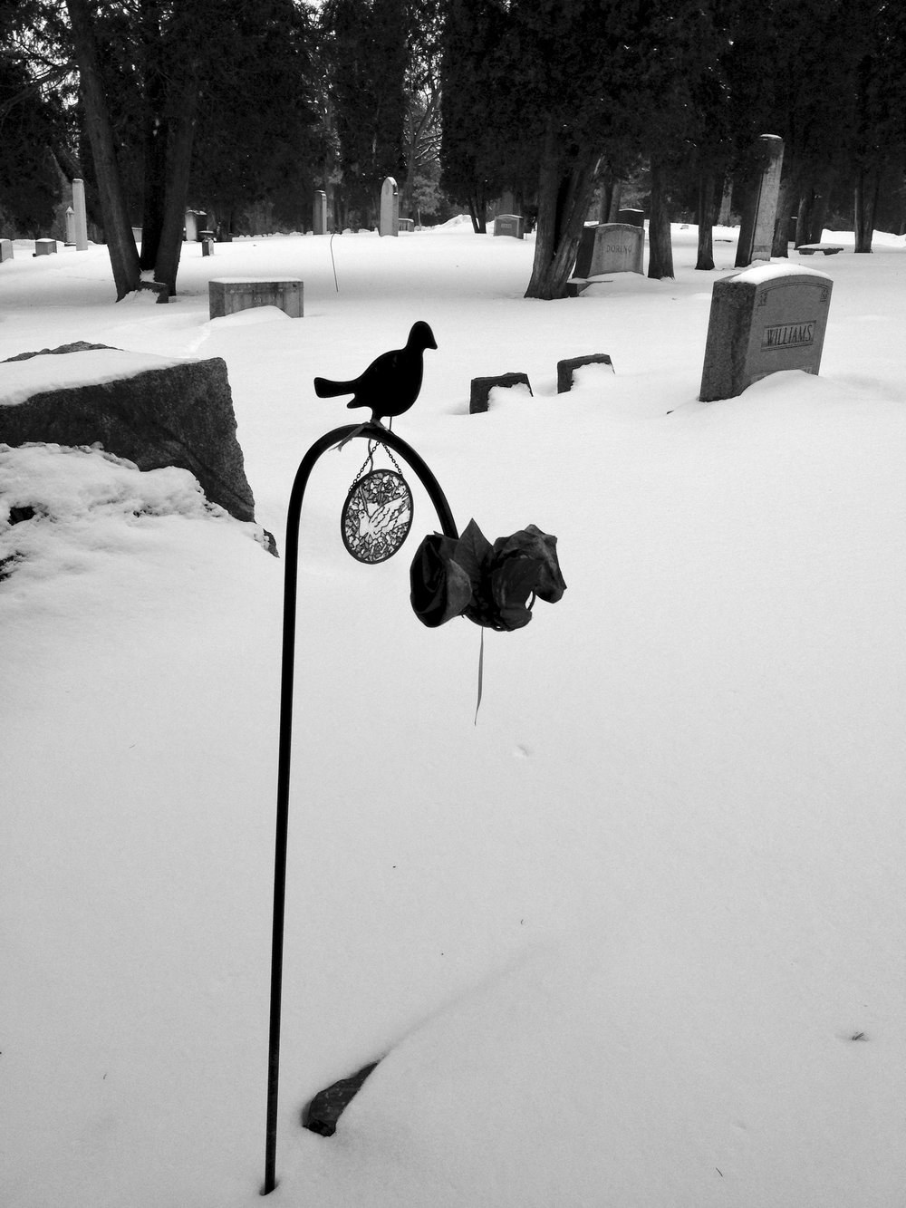 Raven? Forest Hill Cemetary. Madison, Wisconsin. February 2014. © William D. Walker