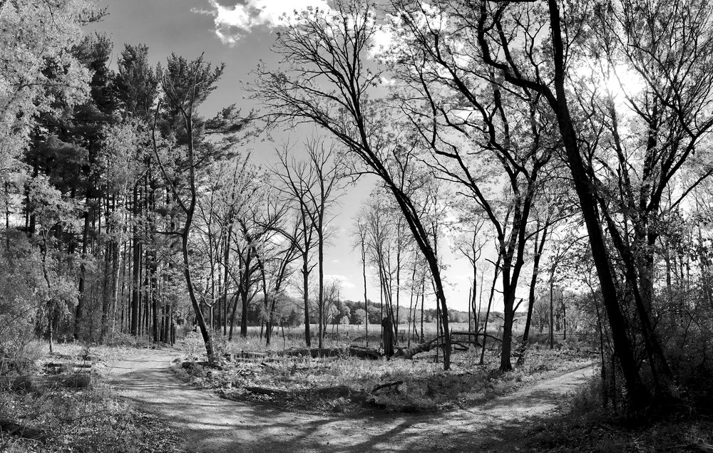 Wooded Curve. UW Arboretum. Madison, Wisconsin. May 2017. © William D. Walker