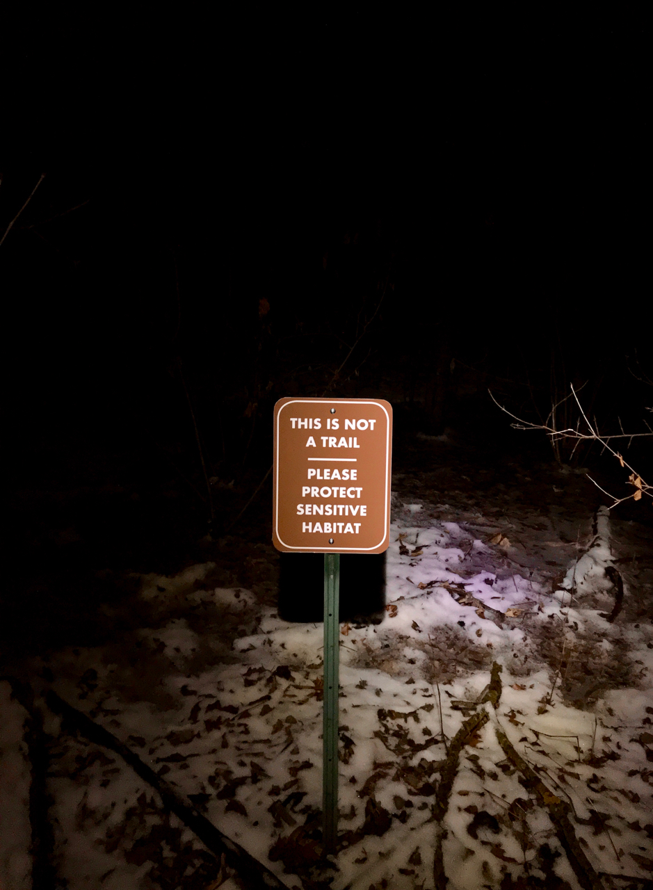 Not a (Night) Trail. UW Arboretum. Madison, Wisconsin. January 2018. © William D. Walker