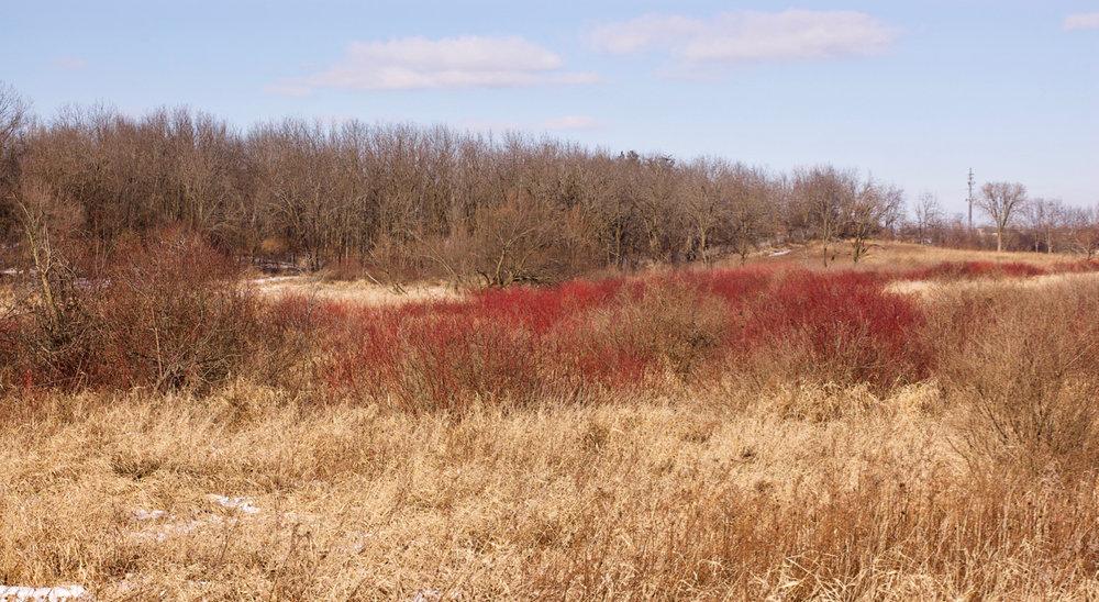 Landscape Scar. Nine Springs E Way. Madison, Wisconsin. January 2018. © William D. Walker
