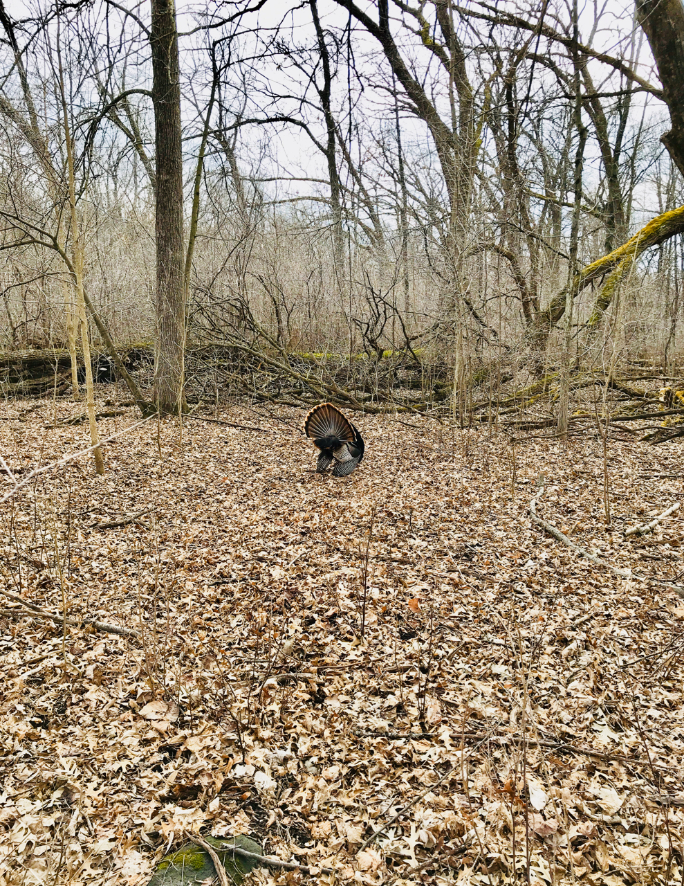 Tom in a Clearing. UW Arboretum. Madison, Wisconsin. April 2018. © William D. Walker
