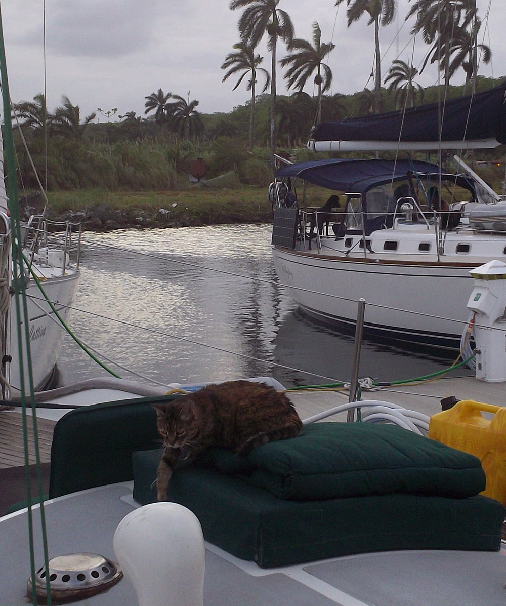 Nina, the sailing cat, relaxes at dock in Colon, Panama as a poodle on the boat across the dock eyes her from the helm. Nina and the rest of the Coconut Woman crew slipped into the dock with just enough momentum after their engine decided to quit on them as they navigated one of the busiest ports in the world.