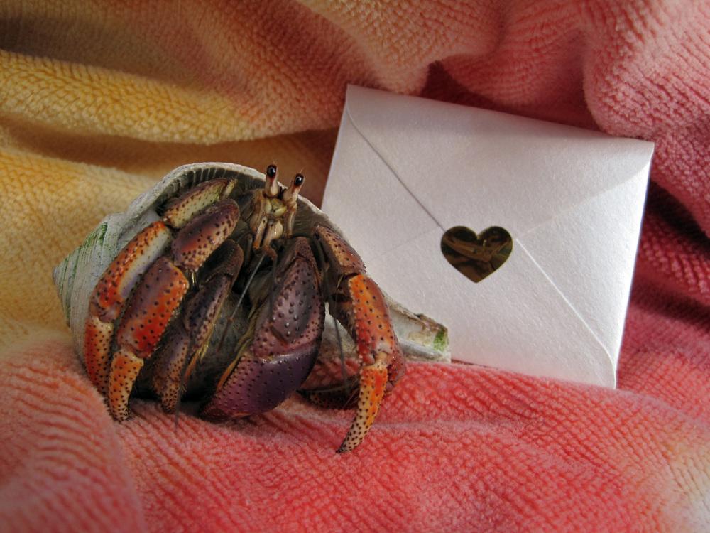 Happy Valentine's Day from Herman.