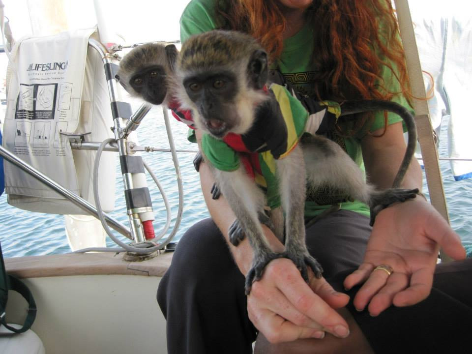 Monkeys aboard