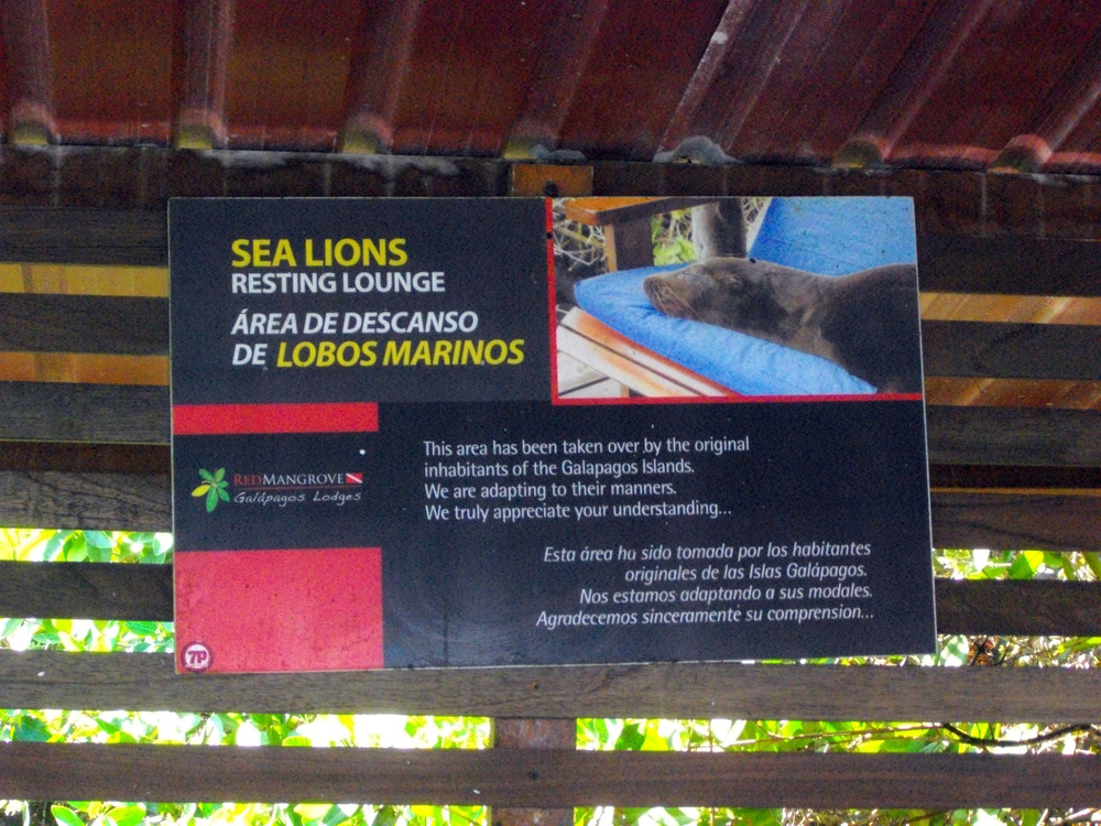 Sea Lion Lounge Sign!.jpg