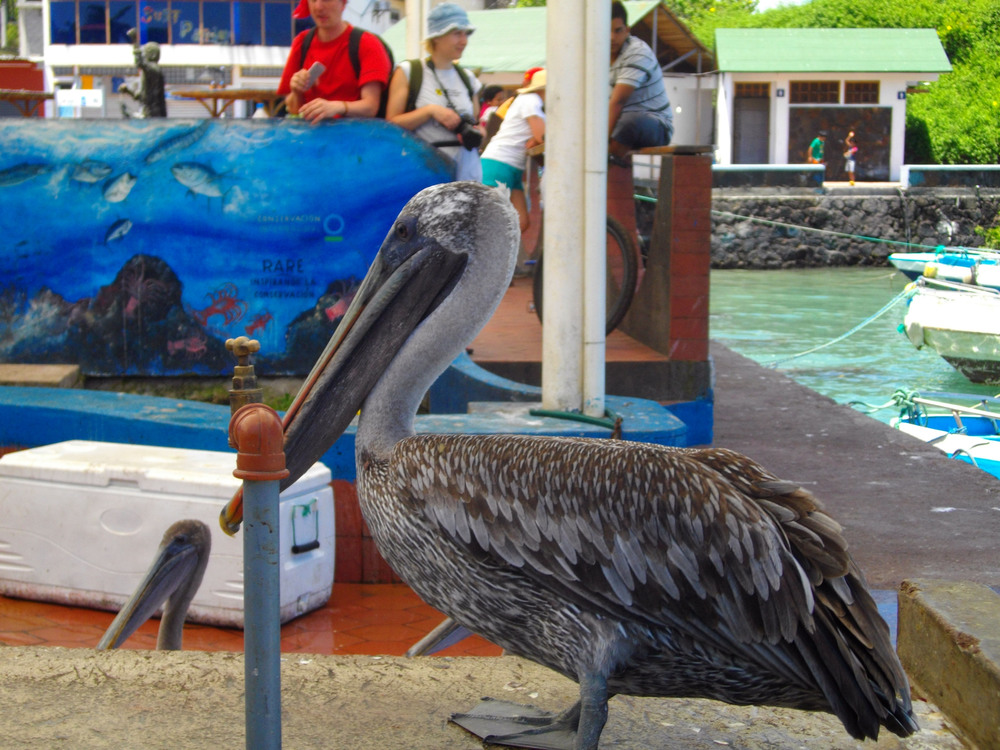 Pelican on fish stand table.jpg