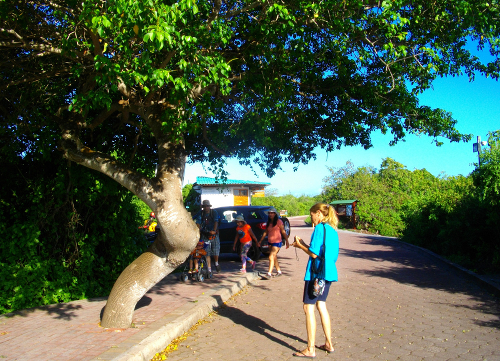 Lisel and huge manchineel.jpg