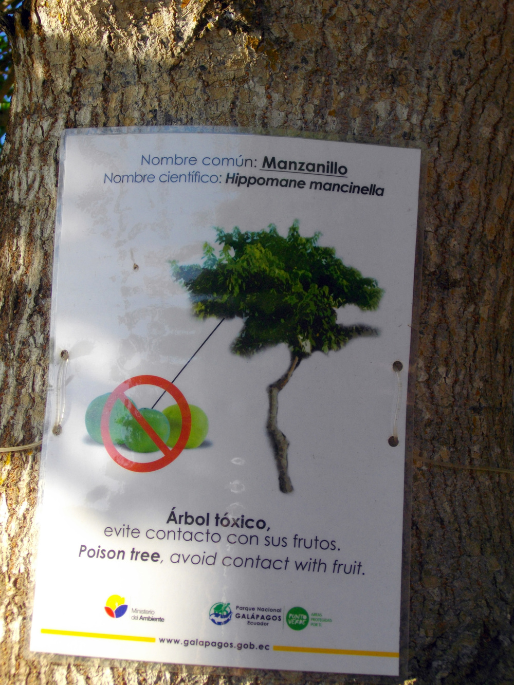 Sign on Manchineel.jpg