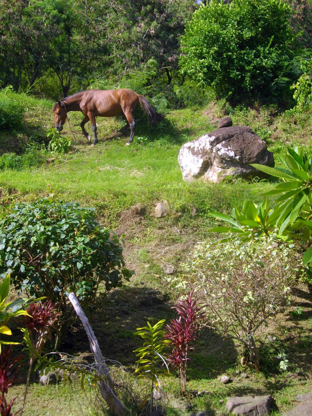 Pension Maive Mai's horse.jpg
