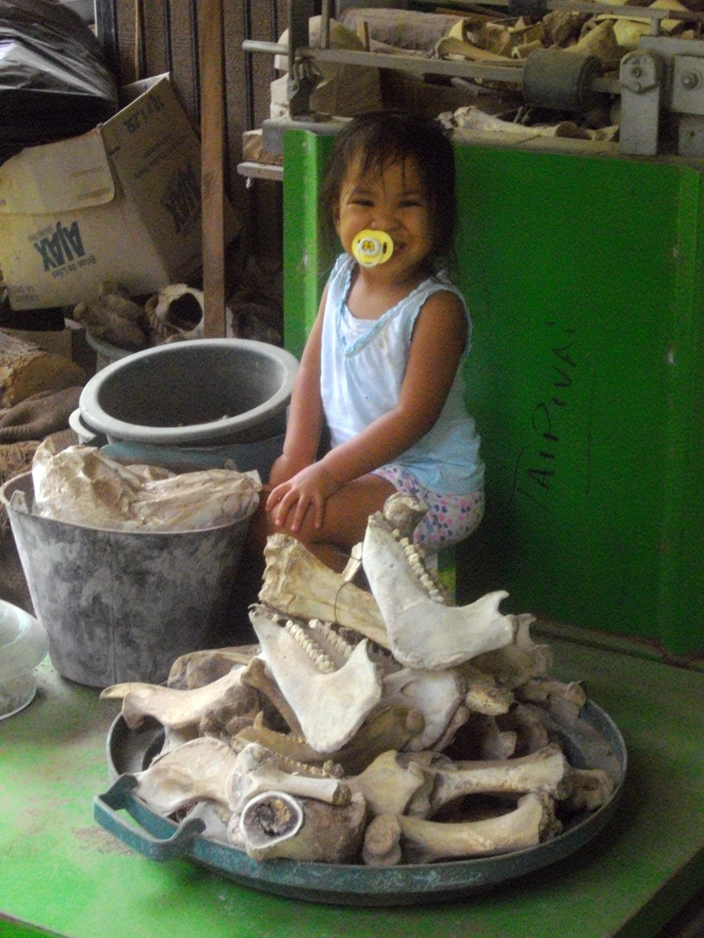 "Pic of the month: ""Bone to be a Princess."" Nuku Hiva's resident carver and sculptor has a wee one who likes to play with bones, but they still hold no candle to her trusty pacifier. Her dad uses these old animal bones to craft jewelry items with a dentist's tool, like the mini tiki shown in the next pic. The local Catholic churches commission him to carve hard-wood sculptures, such as the statue of St. Joseph and Jesus."