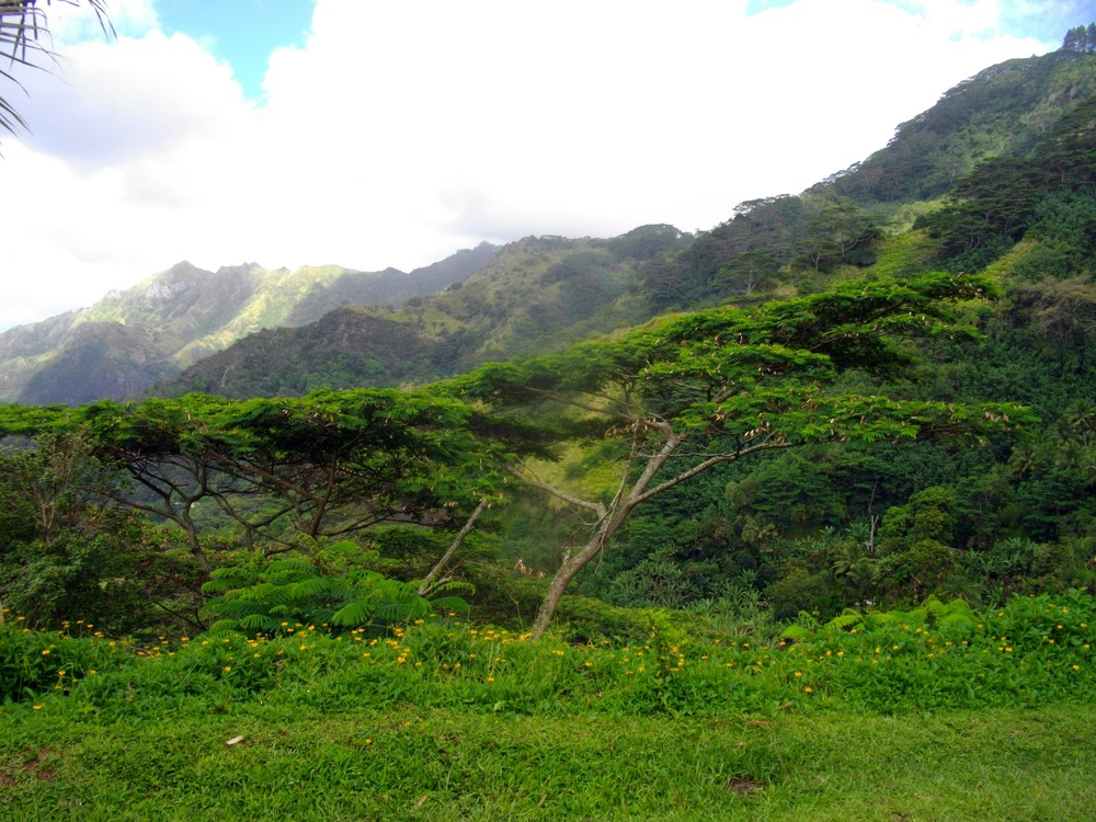 Acacia trees frame the mountains of Nuku Hiva.