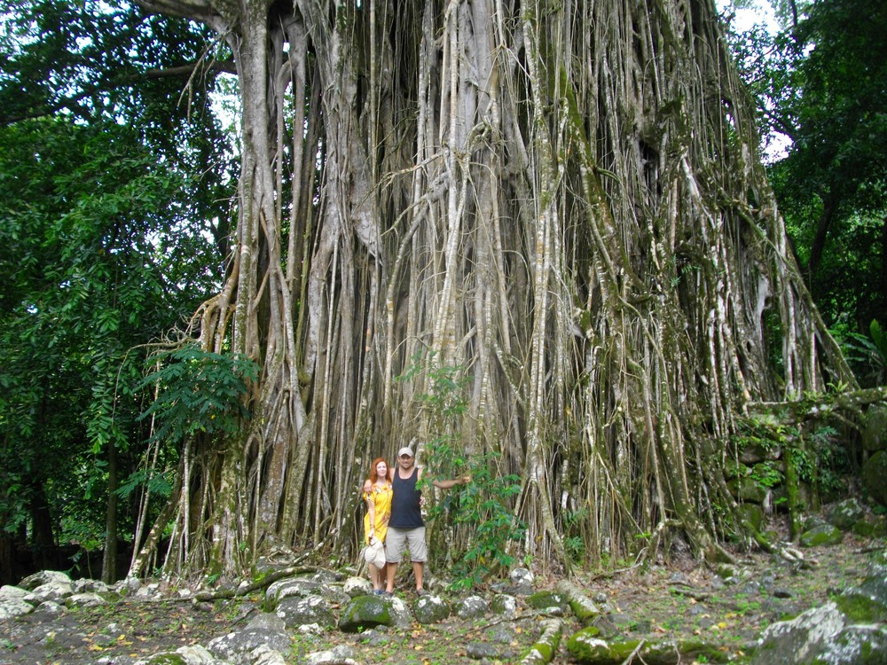 A banyan tree planted at the highest point in the village by one of the early priests.