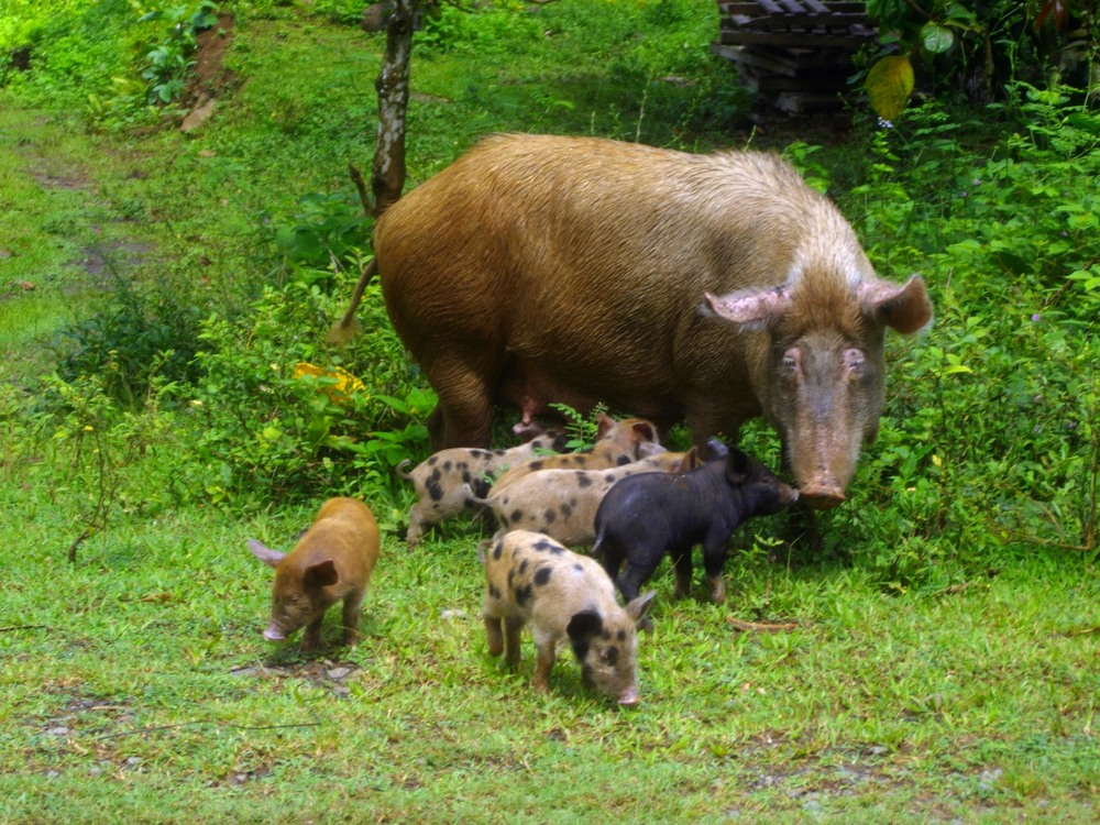 Young children on Nuku Hiva grow up tending to farm animals and running free on the island until high school when they move to Tahiti and fly home for holidays.