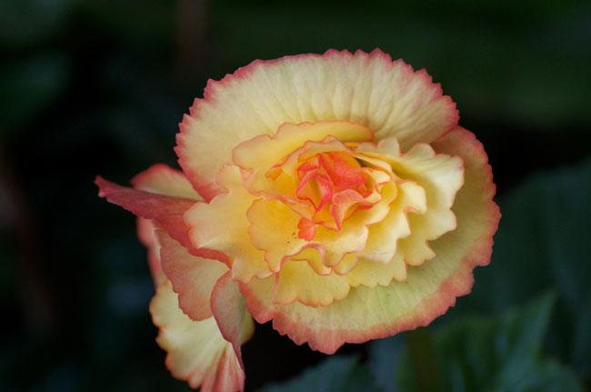 Flower-Fringe-Web.jpg