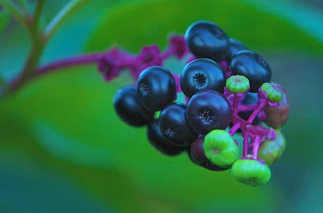 Blueberry-Branch-Web.jpg