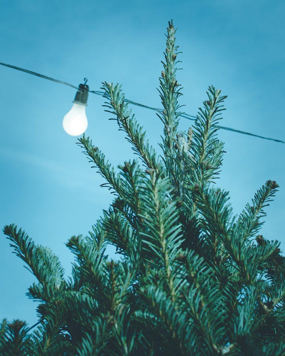 Chicago Christmas Tree Lighting 2019.Christmas Tree Lighting Ceremony Millennium Park Chicago