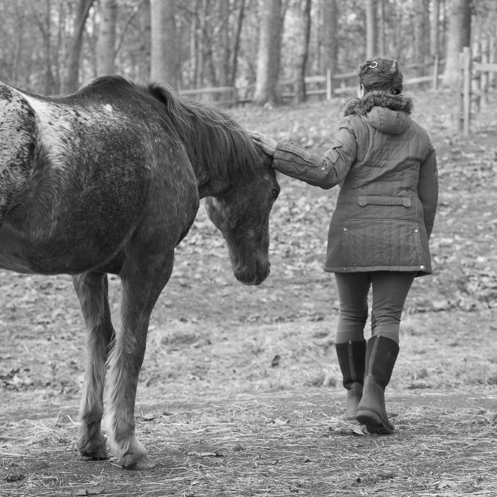 MollyMPeterson_EquinePhotography_web.jpg