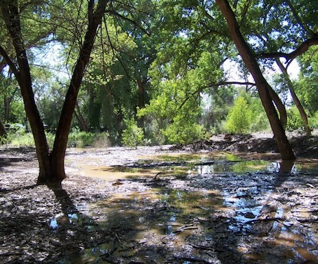 A-flooded-Rio-Grande-bosque-600x450.jpg